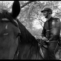 Mounted Cop  1972